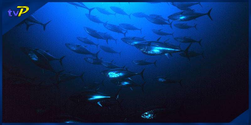 Descobreix el món del Peix Blau
