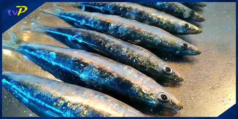 ag-peix-blau-sardines-ve1-agenda-de-palamos